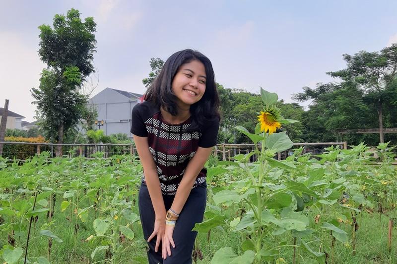 taman bunga matahari arumdalu farm